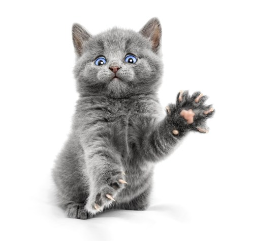Cats_White_background_505955