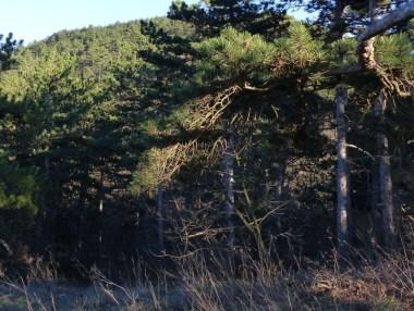 Szekrényes-hegy a Sorrentóról