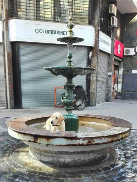 Koira suihkulähteessä