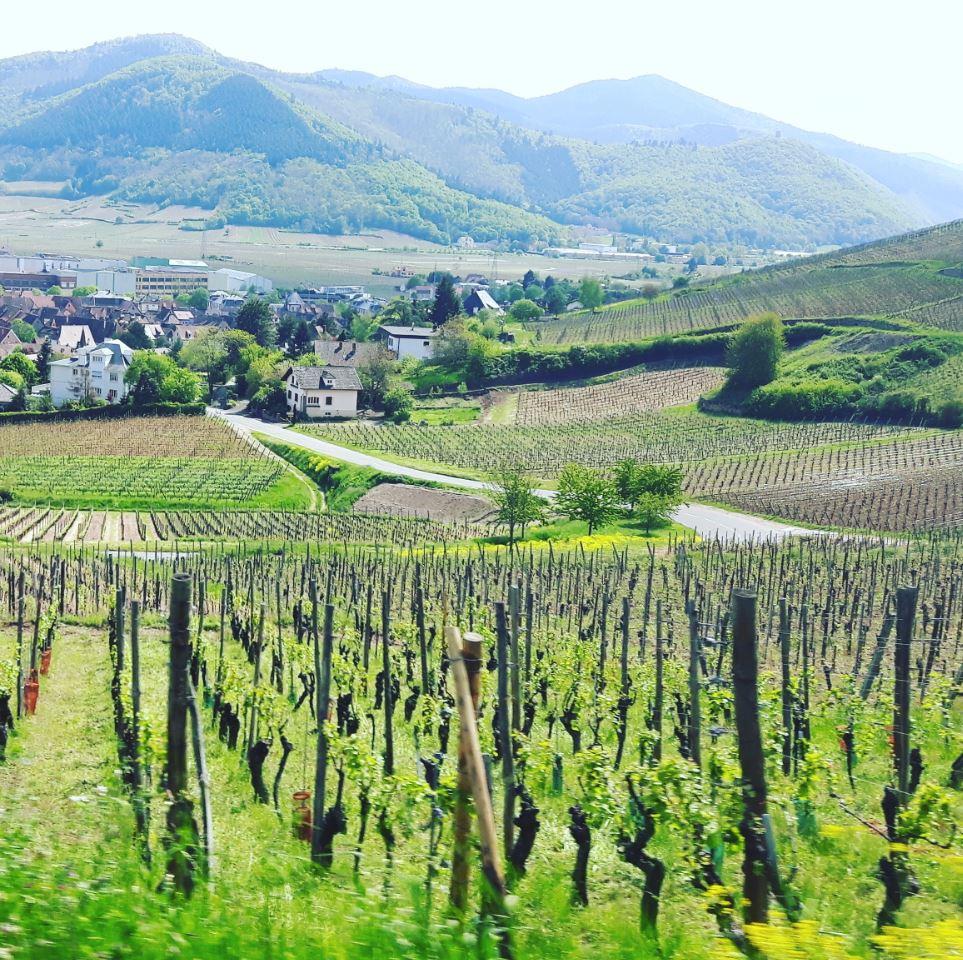 #Alsace : entre villages pittoresques et parc d'attractions