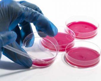B.T.S.-Biotechnologies-(BT)
