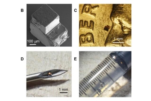 Imagens com referência de escala do chip injetável.