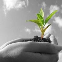 ¿Quieres crecer como profesional? ¡Sigue estos 4 pasos!