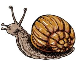 escargot-copie