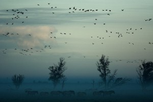 Foggy landscape with birds and horses - how to respond and stop gossiping at work