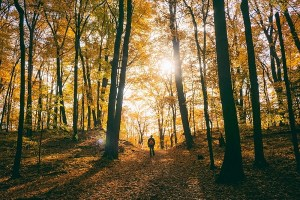 Walk in an autumn forest - think how to verify business idea
