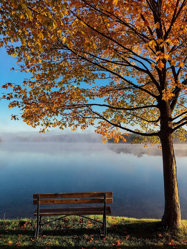 Bench, tree and lake view - how to fire an employee nicely