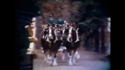 1992_budweiser_clydesdales