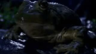1995_bud_frogs