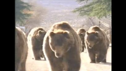 1997_pepsi_bears_dance
