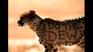 2000_Mountain_Dew_Bad_Cheetah