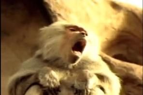 2003 Sierra Mist Super Bowl ad Monkeys get refreshed