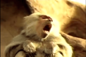 2003 Sierra Mist Super Bowl ad Monkeys get refreshed