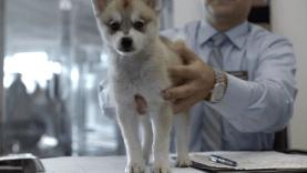 Carscom_wolf_puppy_drama