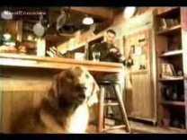 2000 BUDWEISER – Talking Dog