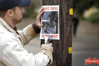 """Lost Dog,"" will feature the world-famous Budweiser Clydesdales and their favorite companion. In the spot, the Budweiser Clydesdales will tell an emotional story and help a puppy who has lost his way learn the true meaning of friendship."