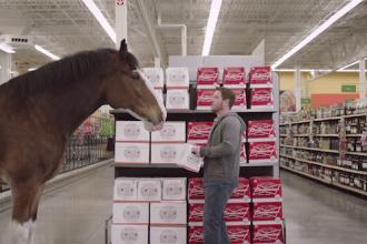 "2015 Budweiser Super Bowl Ad Clydesdale ""Beer Run"" #BestBuds"