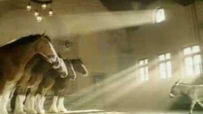 2004 Budweiser – Donkey