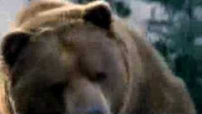 2006 BUD LIGHT – Bear Attack