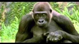 2007 BUD LIGHT – Apes Plan