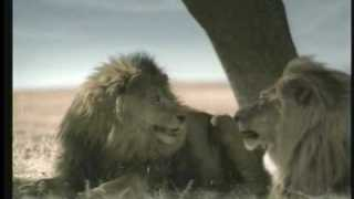 2007 TACO BELL – Lions
