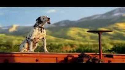 """2008 Budweiser – Dalmatian Trains """"Hank"""" for Team"""