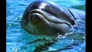 2002 yahoo dolphin