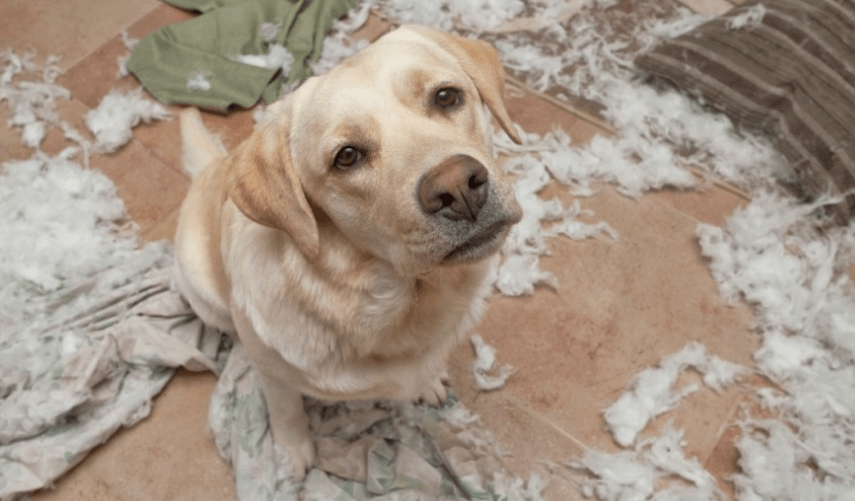 Problemas caninos