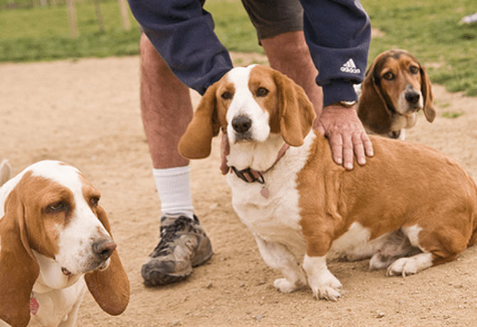 Combatiendo la Obesidad Canina
