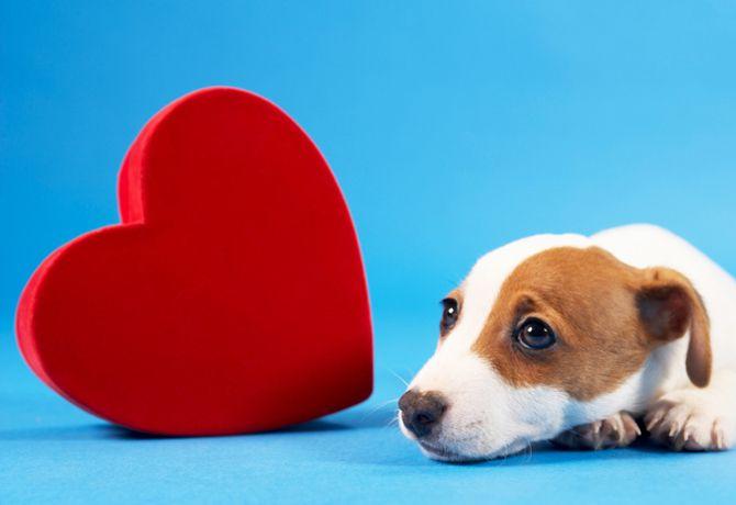Cuida el corazón de tu Super Cachorro
