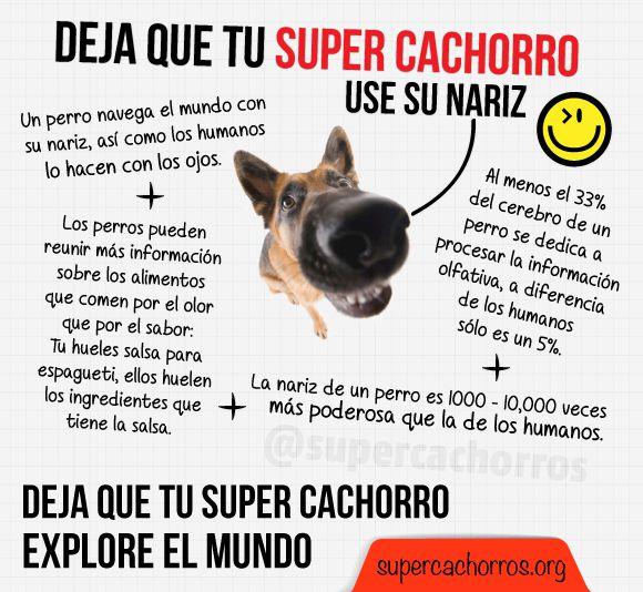 Super Cachorros olfato