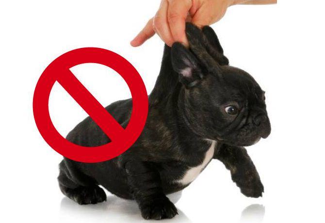 Cargar a un perro por la piel…