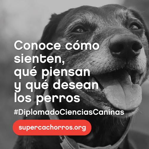 Diplomado en Ciencias Caninas