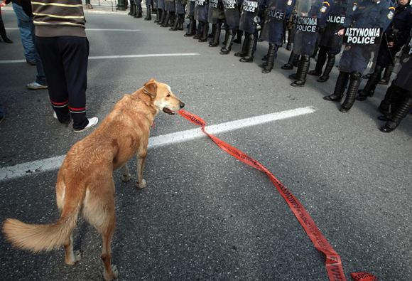 A dog stands between protestros and a po