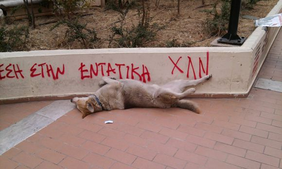 loukanikos_the_greek_riot_dog_relaxing_by_ecatodarcus-d5ki3d5