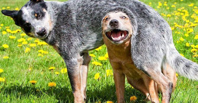 Perros Adolescentes