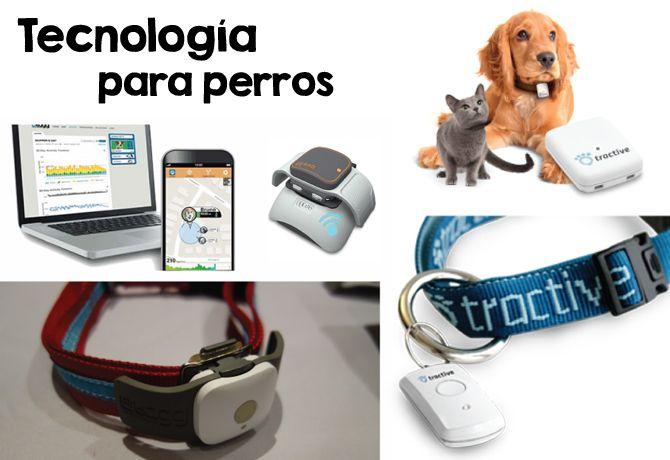 Dispositivos para cuidar mejor la salud de tu perro