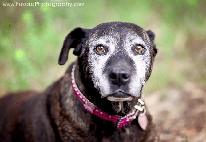 Prueba los sentidos de tu perro