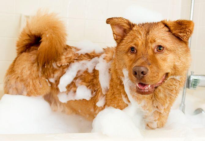 ¿Llevar a tu perro a estética?