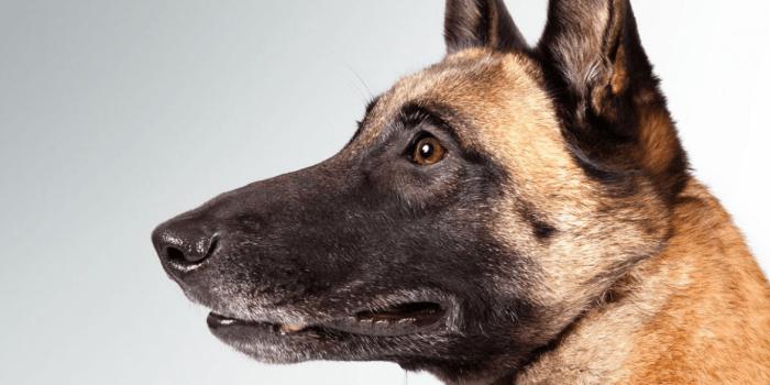 Cómo Tener Un Buen Perro Guardián