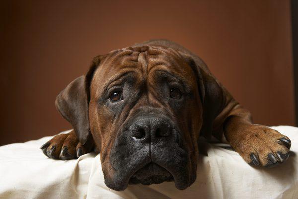 ¿Tu Super Cachorro tiene reumas?