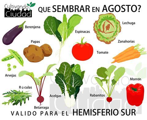 Variedades para sembrar en agosto supercampo for Que plantas se siembran en un huerto