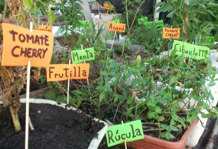 C mo empezar con una huerta org nica supercampo for Huerta de aromaticas en macetas
