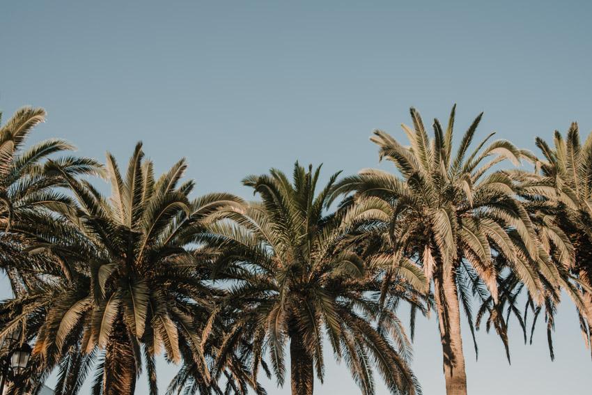 Palmeras del balcón de España en Nerja, Supercastizo