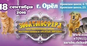 Выставка кошек Зооатмосфера, город Орёл, SuperCats (ASC)
