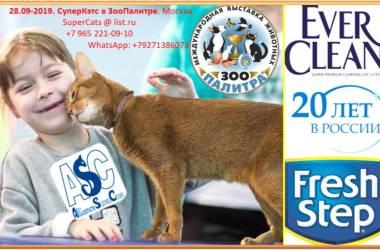 /news/supercats-zoopalitra19
