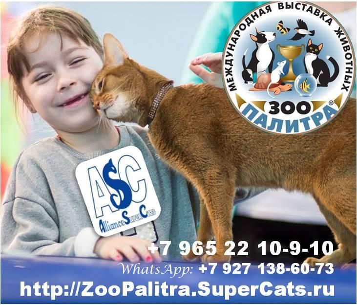 SuperCats-invitation.jpg