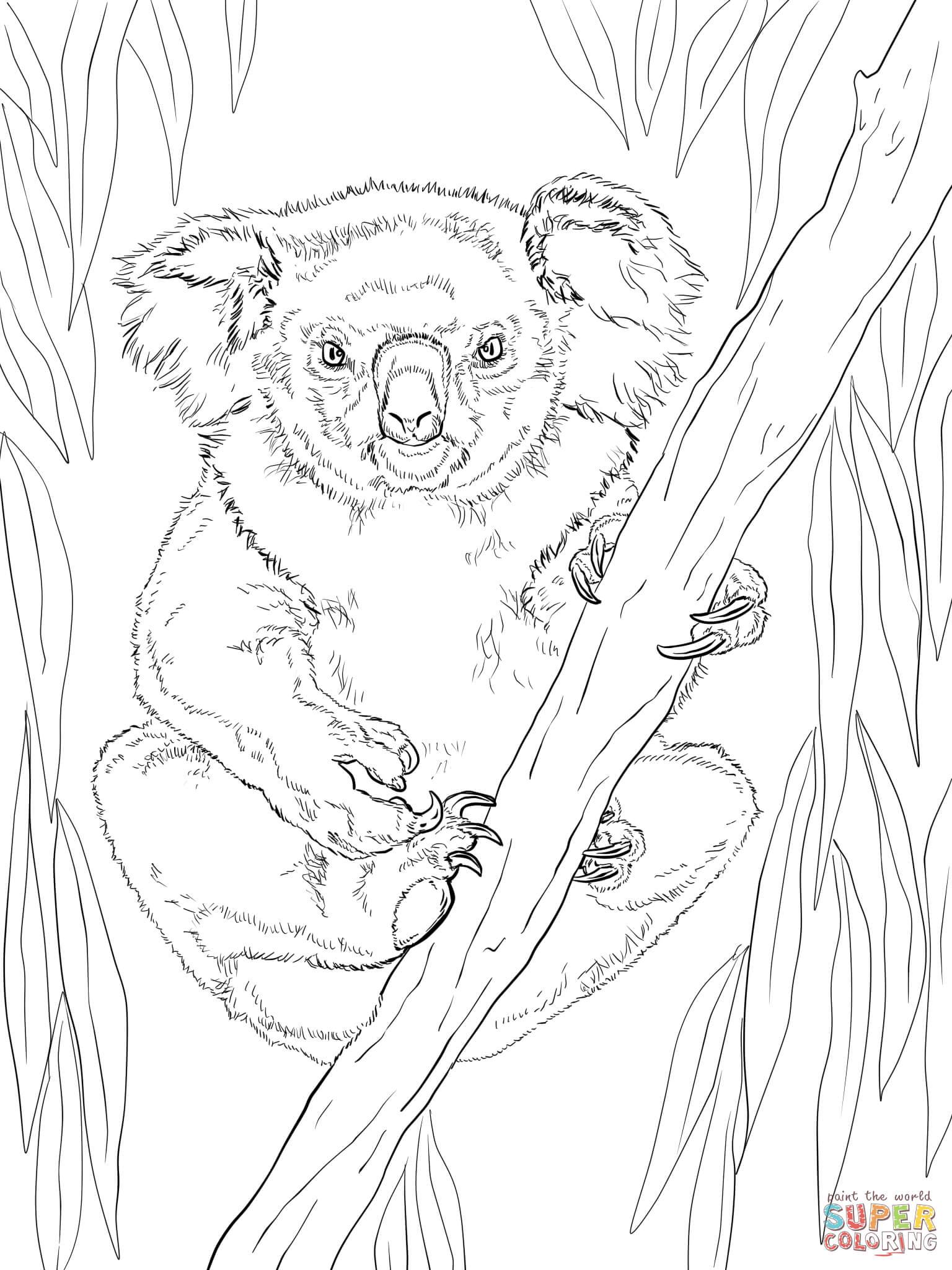 Panda Cute Baby Animal Coloring Pages Novocom Top