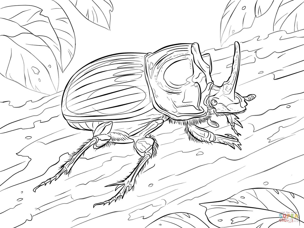 Scarabaeus Lunus Beetle Coloring Page