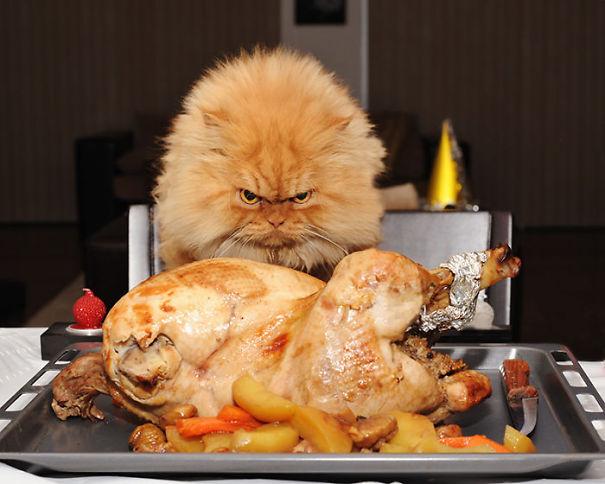 Гарфи — самый сердитый кот в мире